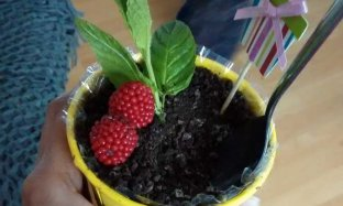 Cara Membuat Es Krim Dalam Pot Bunga