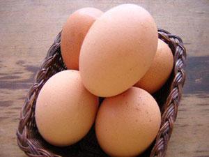 telur2