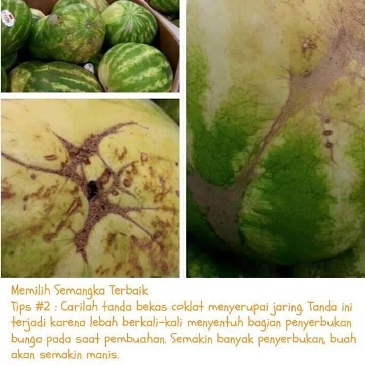 semangka-1