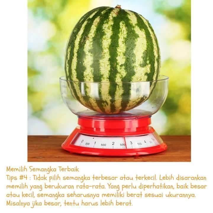 semangka-3