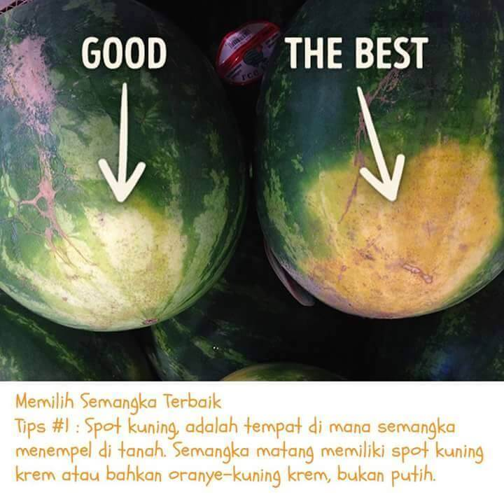 semangka-5